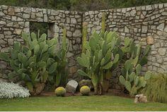 Jardin zonas desérticas