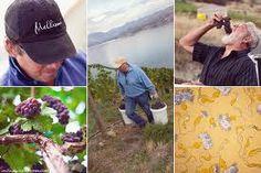 Mellisoni Vineyards. Lake Chelan, Washington.