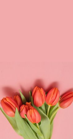 phone wall paper plants Best Phone Wallpaper For Your Phones, click below link if you like our wallpapers. Floral Wallpaper Iphone, Spring Wallpaper, Cute Wallpaper For Phone, Cellphone Wallpaper, Wallpaper Nature Flowers, Flower Background Wallpaper, Flower Backgrounds, Wallpaper Backgrounds, Paper Plants