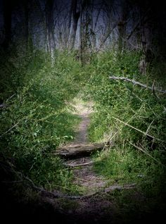 Two roads diverged in a wood, and I,  I took the one less traveled by,  And that has made all the difference.   --Robert Frost