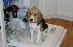 Tucker helps with the dishes