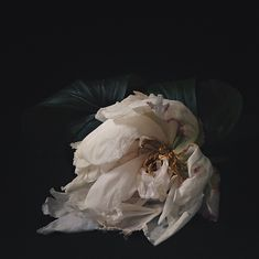 Ruffled Peony by Michelle P. via Besotted