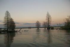 spanish lake, new iberia, Louisiana. Photo credit Gretchen M. Decuir
