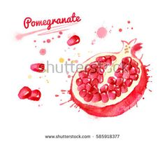 Pomegranate Illustration Stock Images, Royalty-Free Images ...