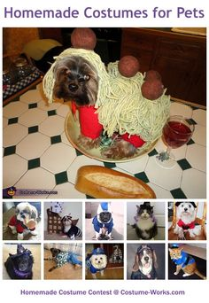Homemade Costumes for Pets - Halloween costume contest