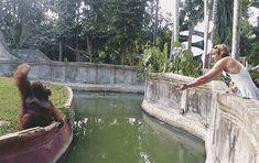 Orangutan Plays Catch with Zoo Visitor. #animals