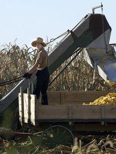 Amish farmer rides a horse-drawn cart during corn harvest Oct. 7, 2004, near Bird-in-Hand, PA | CBS News