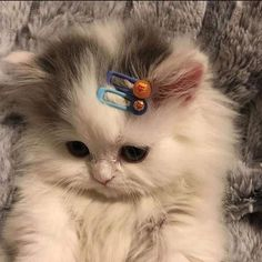 Uploaded by aphrodite. Find images and videos about cute, cat and animal on We Heart It - the app to get lost in what you love. Cute Baby Cats, Cute Little Animals, Cute Cats And Kittens, Cute Funny Animals, Funny Cats, Cute Dogs, Cute Kitty, Cute Fluffy Dogs, Kittens Cutest Baby