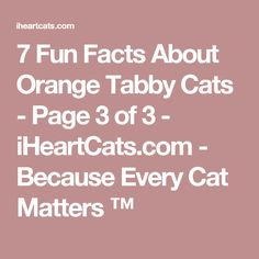 7 Fun Facts About Orange Tabby Cats - Page 3 of 3 - iHeartCats.com - Because Every Cat Matters ™