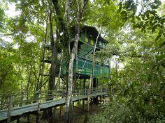 Casa do Tarzan - Ariaú Towers - O hotel tem 288 unidades divididas entre apartamentos , suítes (localizados nas torres) e casas de árvore . O mais alto das unidades, a Casa do Tarzan, é construído em cima de uma árvore de mogno vivo, na altura de 22 m do chão. As torres são interligadas por uma madeira passarela sistema de aproximadamente cinco milhas (8,0 km), tudo dentro do dossel da floresta