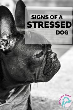 #symptoms of #stress in #dogs. Great post! Can you tell just by looking at your dogs body language when he/she is stressed out? Many pet parents don't have a clue! In this article we'll be sharing signs