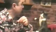Smart Cat Using Sign Language