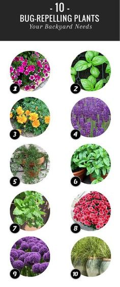 Front Yard Landscaping 10 Plants That Repel Bugs Naturally - A few strategically placed bug repelling plants will help ward off insects, allowing you to dine al fresco in peace. Garden Pests, Plants, Backyard Landscaping, Lawn And Garden, Backyard Garden, Outdoor Gardens, Outdoor Plants, Backyard, Gardening Tips