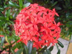 flowers of costa rica photos - Google Search