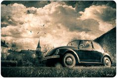 Old beetle