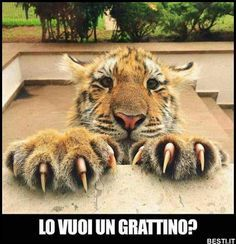 Funny animals - Page 6 of 23 - Gloria Love Pets Animals And Pets, Baby Animals, Funny Animals, Cute Animals, Animals Photos, Wild Animals, Big Cats, Cool Cats, Cats And Kittens