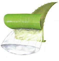 Les produits de Forever living products sont uniquement basés sur la pulpe pure et fraîche
