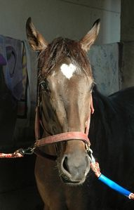 hearts in nature I want this horse  http://www.theheartlinknetwork.com