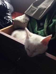 Misty's sleeping spots #1