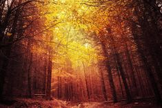 """Autumn forest light framed photo print - nature photography - large framed photo wall art - """"Beneath the Leaves"""" by Zsolt Zsigmond - SKU0101"""