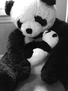 #shutdown panda cam replacement