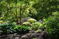 Blarney Castle and Gardens, Ireland Castles In Ireland, Great Places, Gardens, Plants, Outdoor Gardens, Plant, Garden, House Gardens, Planets
