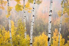 Remember The Vibrant Colors Of Fall  Fall and its beautiful array of colors is a favorite time of year for many. Enjoy these photos to help remember of one of the earth's most colorful seasons as winter begins to approach.  http://funfactualweirdbreathtaking.blogspot.com/2014/12/remember-vibrant-colors-of-fall.html  #art #photography #chuckjason #donsmith #alistairnichol #douglasstratton #michaelfrye