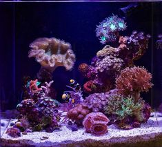 17 Gallon Nano Reef Cube Rebirth - May 2019 Featured Reef Aquarium Saltwater Tank, Saltwater Aquarium, Aquarium Fish Tank, Coral Reef Aquarium, Marine Aquarium, Nano Reef Tank, Reef Tanks, Freshwater Aquarium Sharks, Tropical Fish Tanks