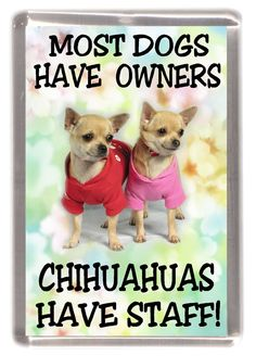 "Chihuahua (Smoothcoat) Dog Fridge Magnet ""..Chihuahuas Have Staff!"" By Starprin #chihuahua (Smoothcoat) Dog Fridge Magnet ""..Chihuahuas Have Staff!"" By Starprint"