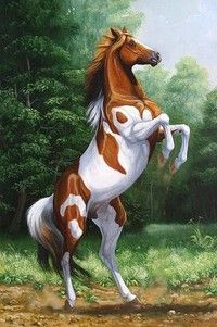 Compra Diy Diamond painting Cross stitch Kit scenery sticker diamond Embroidery animals horse round Diamond mosaic Crafts Needlework en Wish- Comprar es divertido Most Beautiful Horses, Pretty Horses, Horse Love, Animals Beautiful, Horse Drawings, Animal Drawings, Drawing Animals, Cross Paintings, Animal Paintings