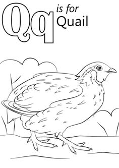 Letter Q is for Quail coloring page from Letter Q category. Select from 26355 printable crafts of cartoons, nature, animals, Bible and many more.