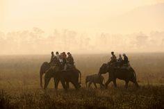 Petit tour de l'Assam, un état à l'est de l'Inde en marge de la société moderne - National Geographic France