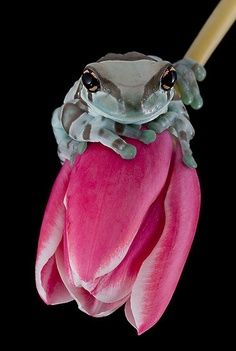 strange frogs :)