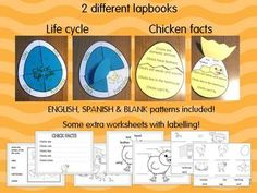 Chick life cycle + facts craftivities