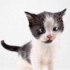 Crosseyed kitten