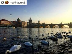 #Repost @martinapres8 with Charles bridge view  Starting the 2017 in this wonderful place  the city of my Erasmus and the one that has stolen my heart #love #prague #praha #erasmus #neverends #fun #besttime #oldtimes #newyear #2017 #beginning #backhere #czechrepublic #discover #travel #italiangirls #traveler #guide #nature #karluvmost #charlesbridge #carlo #colpodifulmine #resolutions #myerasmus