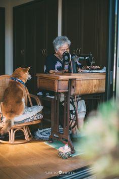 画像 Animals For Kids, Animals And Pets, Cute Animals, Shiba Inu, Allergic To Dogs, Dog Organization, Japanese Dogs, Best Friends For Life, Lovely Creatures