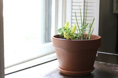 No Garden? No Problem! Create a Self-Sustaining Decorative and Edible Windowsill Planter | eHow Home