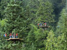 Canopy Adventure & Wildlife Expedition | Ketchikan, AK Shore Excursion