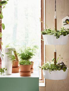 Plantas y macetas cerca de la ventana. De Ikea