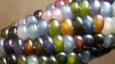 It's a REAL and EDIBLE corn variety called Glass Gem Corn. Looks like jelly beans or beads.