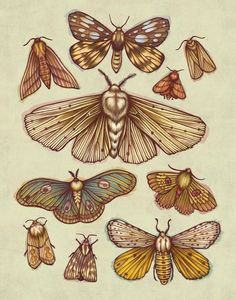 """Moths"" by Kate O'Hara  Print available at http://www.inprnt.com/gallery/kateohara/moths/?utm_content=buffer34ae5&utm_medium=social&utm_source=pinterest.com&utm_campaign=buffer  #artprint #art #illustration"