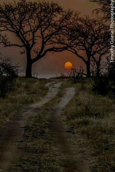 KRUGER NATIONAL PARK SOUTH AFRICA.