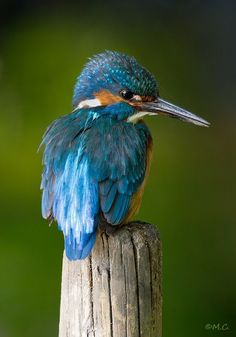 Electric Blue. by Martin Cooper