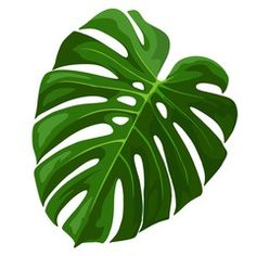 Illustration of Tropical Leaf Monstera Plant isolated on white vector art, clipart and stock vectors. Motif Tropical, Tropical Art, Tropical Leaves, Tropical Flowers, Leaf Drawing, Leaf Template, Leaves Vector, Unusual Art, Painted Leaves