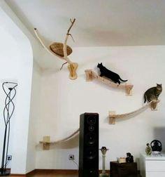 Indoor cat shelves make good cat playground.