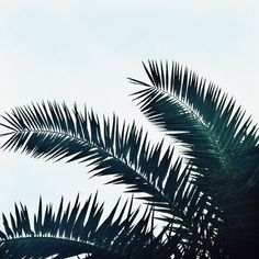 Creative Couleur, Nature, and Green image ideas & inspiration on Designspiration Palmiers, Tumblr Photography, Travel Photography, Nature Images, Pretty Pictures, Summer Vibes, Palm Trees, Planting Flowers, Plant Leaves