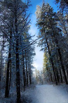 Whitehorse, Yukon, Canada. Mec & TuT Photography