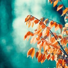 Teal Orange Photography turquoise coral aqua by CarolynCochrane Teal Orange, Orange Leaf, Coral Turquoise, Nails Turquoise, Blue Nails, Teal Blue, Burnt Orange, Blue Green, Orange Wall Art