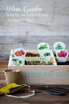 Tipps für die Anzucht von Pflanzen im Haus. Wie du einfach und günstig Jungpflanzen (Gemüse) zu Hause vorziehen kannst. Für eine reiche Ernte am Balkon. Urban Garden / Urban Gardening, selbst versorgen